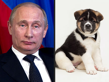 Russian President Vladimir Putin Receives Akita Puppy from Japan