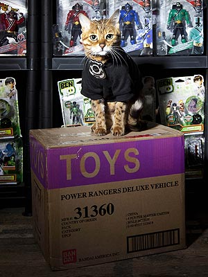 U.K. Toy Factory Hires World's First Security Cat