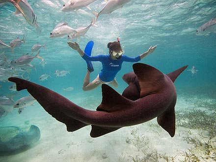 Kate Walsh Swims with Sharks in Belize: Photo