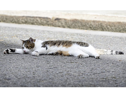 Larry the Cat Sleeps on 10 Downing Street
