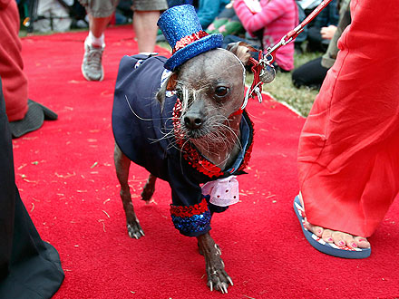 World's Ugliest Dog Winner Is Mugly