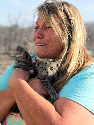 How to Help Pets Displaced by Colorado's Wildfires