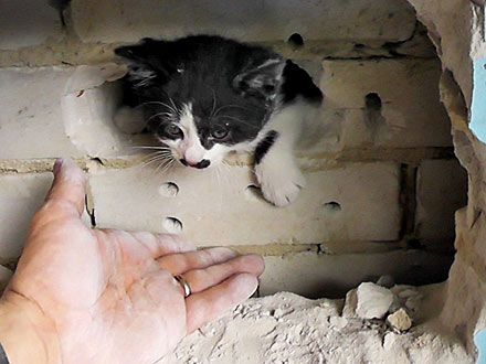 Kitten Stuck in Wall Gets Rescued by Firefighters