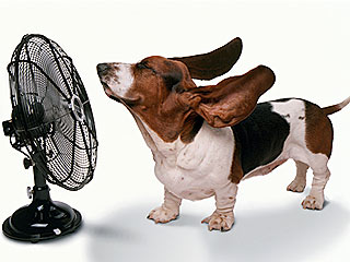 How Does Your Pet Beat the Heat?