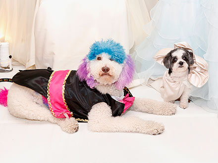 Dogs Marry in Most Expensive Pet Wedding Ever