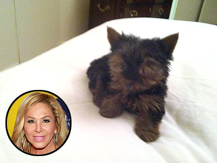 Adrienne Maloof Gets a Puppy: Photo