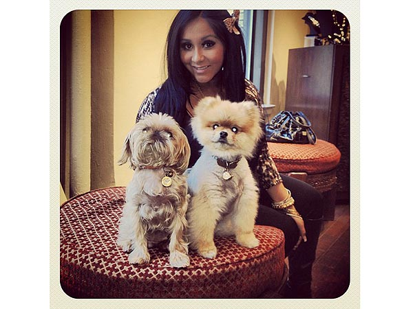 Cuddle Alert! Snooki 'Dies' Over Dogs