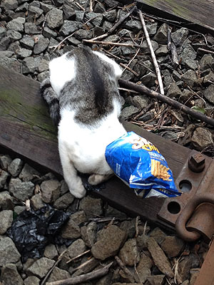Kitten in Sun Chips Bag Saved from Subway Tracks