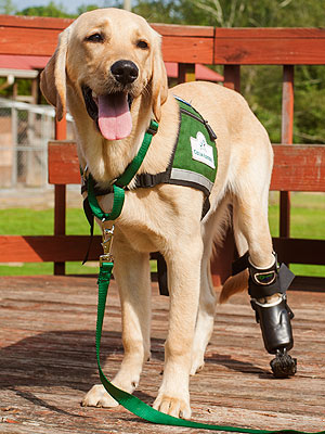 Groupon Deal Helps Puppy with Prosthetic Leg