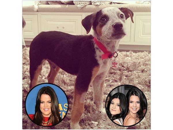 Kendall, Kylie Jenner, Khloe Kardashian Get New Dog