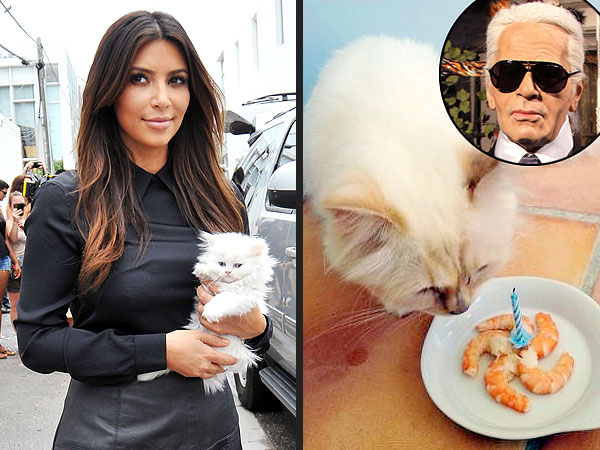 Kim Kardashian's Kitten Takes on Karl Lagerfeld's Cat