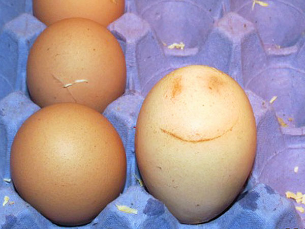 English Hen Lays Egg with Smiley Face Shell