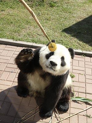 Panda Eats Mooncake for Mid-Autumn Festival