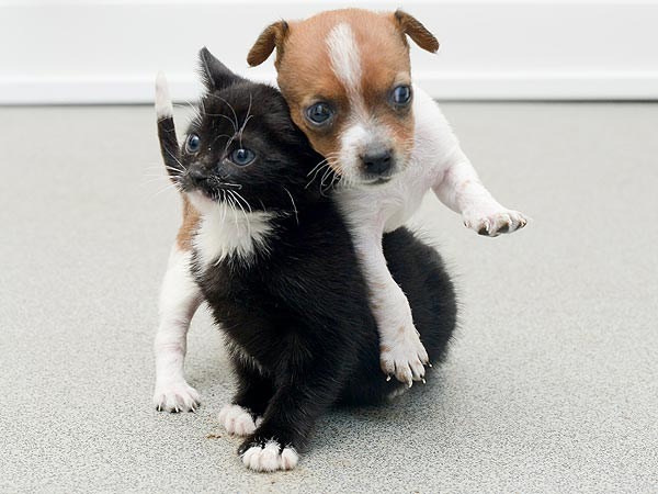 Abandoned Kitten and Puppy Are Unlikely BFFs