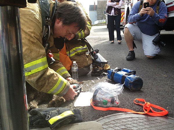 Cat, 17, Resuscitated by Firefighters