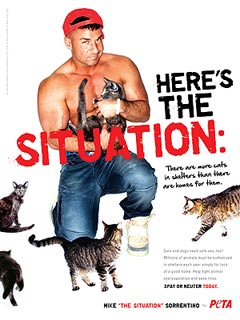 Why Mike 'The Situation' Sorrentino Took His Shirt Off for Kittens