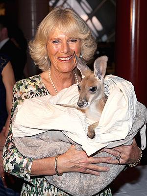 Camilla Cuddles a Kangaroo in Australia