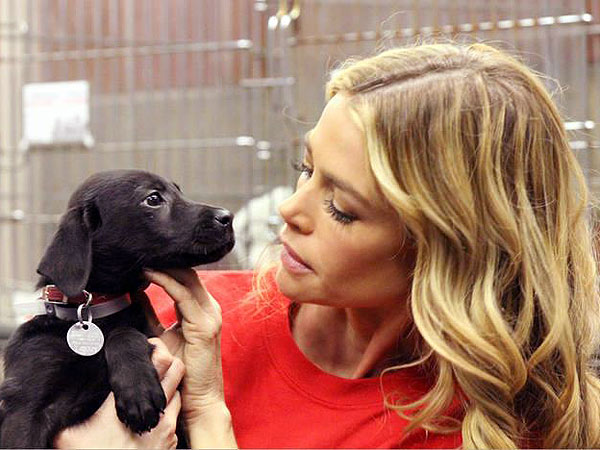 Denise Richards adopts a dog: Photo