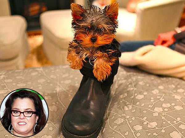 Rosie O&#39;Donnell Gets Puppy