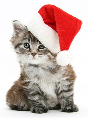 Holiday Gifts for Pet Lovers