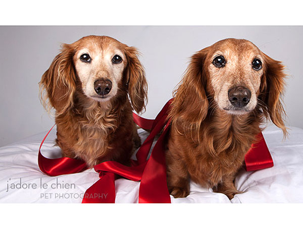Adopt Us! Cassidy & Colby Are Grateful for Their Second Chance