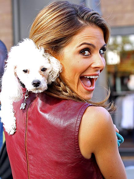 Stars and Their Pets: Maria Menounos's Peekaboo Puppy
