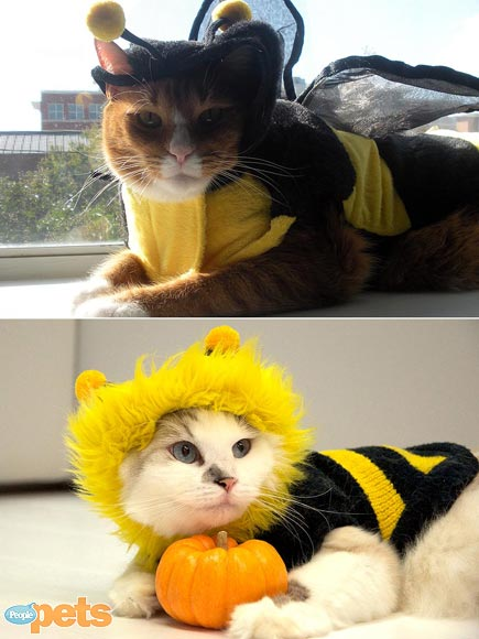 Halloween Faceoff! Pet Costume Showdown