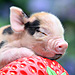 2012&#39;s Unbearably Cute Baby Animals