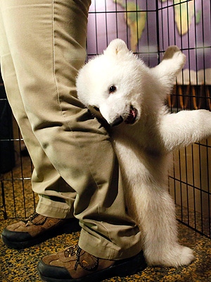 The Daily Treat: This Polar Bear Cub Just Wants to Make You Smile