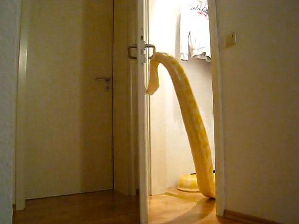 People Opening Doors : Snake opening door viral video people