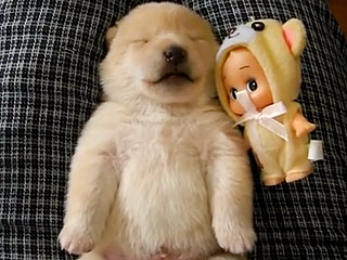 Dreaming Puppy Yelps in Its Sleep: Watch the Adorable Clip