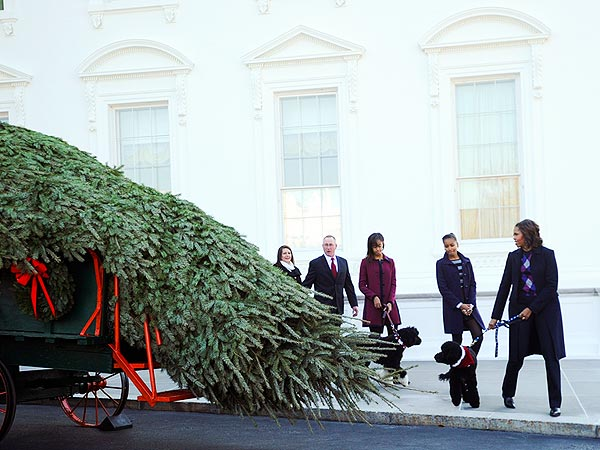 The Obamas' Special Delivery: A Christmas Tree Arrives by Horse ...