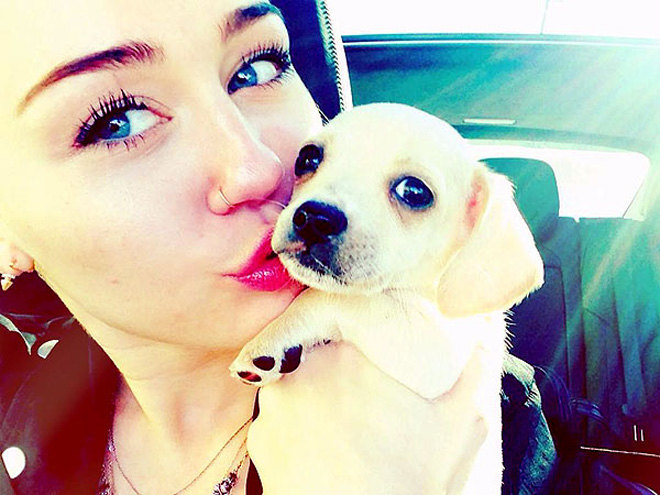 Stars & Their Pets Show the Love!
