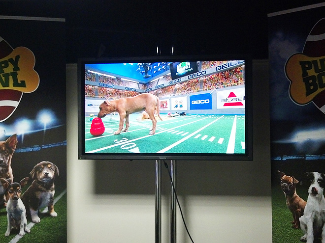 Behind the Scenes at the Puppy Bowl