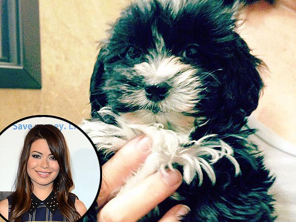 Miranda Cosgrove&#39;s New Puppy: Photo