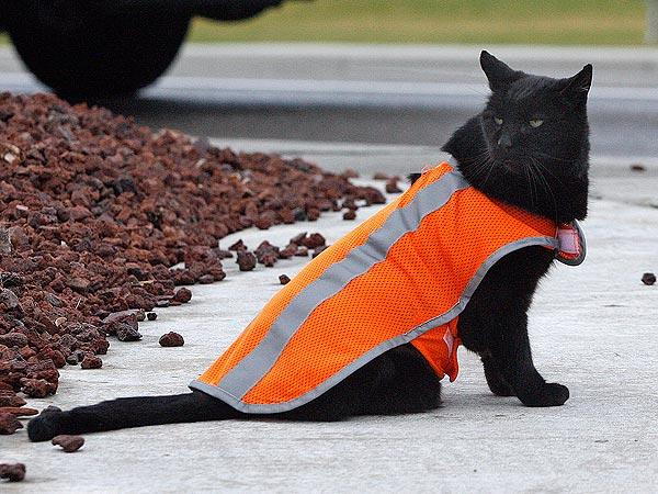 Cat Serves as Crossing Guard in Washington Town