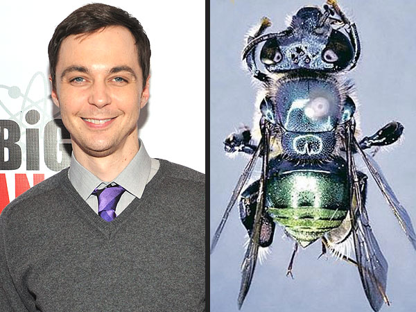 Jim Parsons's Character Gets Bee Species Named After Him on Big Bang Theory