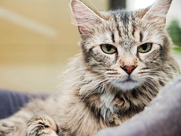 Adopt Me! Lyric Wants to Put the Stresses of Shelter Life Behind Her