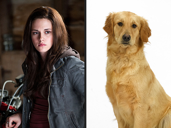 Most Popular Dog Name of 2012 Inspired By Twilight's Bella