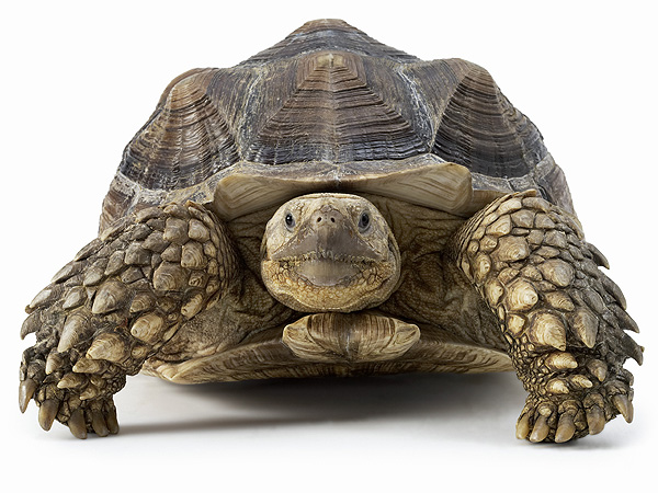 Family Finds Tortoise Missing for 30 Years in Brazil