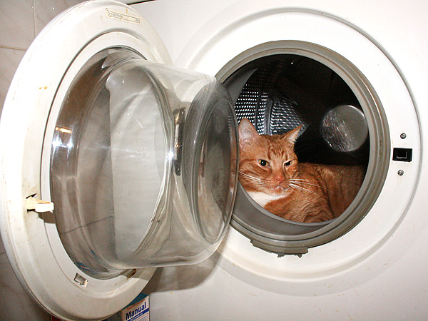 Cat Survives 35-Minute Washing Machine Cycle