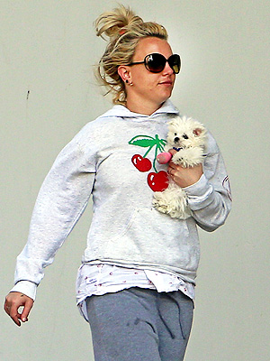 Photo: Britney Spears's New Puppy Sports Cast