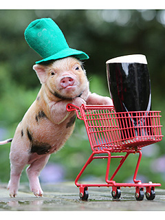 The Daily Treat: Micro Pig Says Top o' the Mornin' to Ya