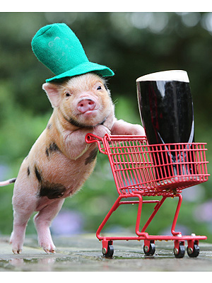St. Patrick's Day: Pig in Green Hat Pushes Grocery Cart with Beer