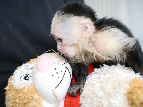 The Daily Treat: Justin Bieber's Monkey Is Already Kissing Someone Else