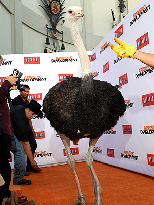 PHOTO: Ostrich Walks the Red Carpet at Arrested Development Premiere
