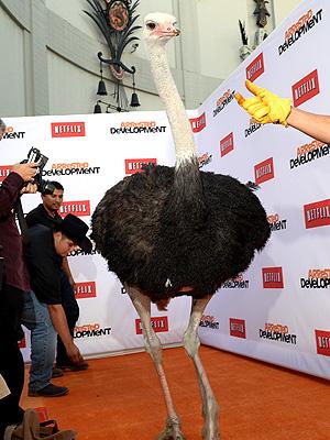 PHOTO: Ostrich Walks the Red Carpet at Arrested Development Premiere