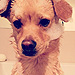 The Daily Treat: How Lauren Conrad's Dog Unwinds After a Ruff Day
