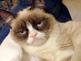 Grumpy Cat Lands a Movie Deal