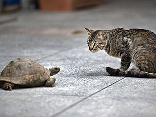 The Daily Treat: Cat vs. Turtle – Who Will Win?